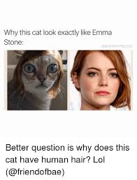 Dog Text By Memeemma Meme - why this cat look exactly like emma stone a boywithnojob better