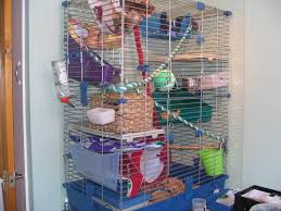 Best Bedding For Rats Choosing Cages Isamu Rats
