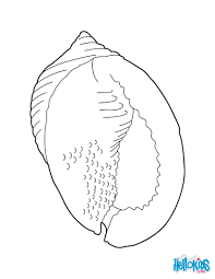 coloring page great for image transfers printable seashell pages