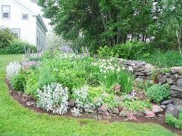 252 best perennial plants images on pinterest perennials mobile