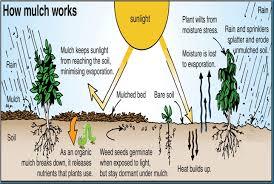 self sustaining garden part 1 a tasteful sustainable garden california energy