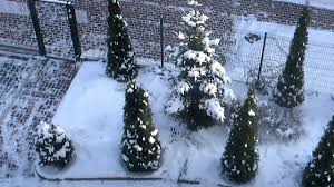 real snow and real christmas trees youtube