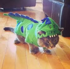 Dragon Halloween Costumes Cat Dragon Halloween Costume Global Animal