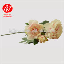 Bulk Peonies List Manufacturers Of Peonies Flower Bulk Buy Peonies Flower Bulk
