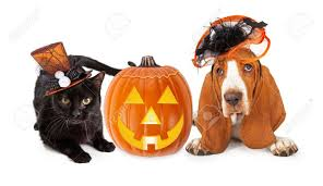 cute black kitten and basset hound dog wearing funny and fancy