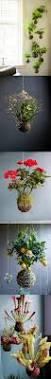 top 25 best hanging flower baskets ideas on pinterest flower