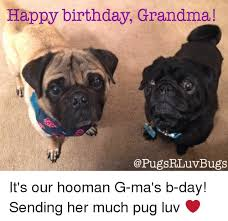 Happy Birthday Pug Meme - happy birthday grandma bugs it s our hooman g ma s b day sending