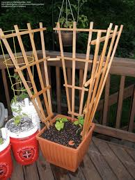 Vegetable Gardening Pole Bean And Cucumber Support Ideas 1 By