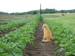 Pumpkin Farms In Wisconsin Dells by Orange Cat Community Farm Localharvest
