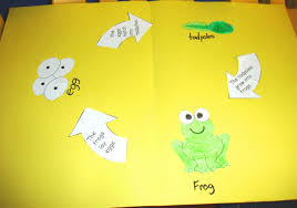 learning ideas grades k 8 frog life cycle craft project