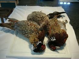 cuisine faisan chartreuse de faisan la cuisine de papounet