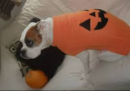 boxer dog in boxing gloves 47 cute fun and scary halloween costumes for your boxer treats