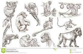 animals around the world monkeys and apes an hand drawn full s