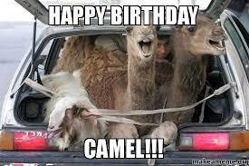 Camel Memes - camel meme 28 images butler camel memes quickmeme camel hump