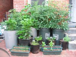 Vegetable Gardening In Pots by Vegetable Container Garden For More Organic Gardening Ideas