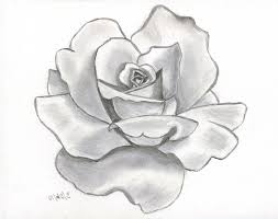 25 trending pencil sketches of flowers ideas on pinterest