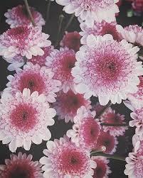 Love Flowers Dsfloral 12 000 Reasons To Love Flowers U2013 Design Sponge