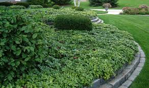Fall Garden North Texas - here s a list of the top plants for north texas best low