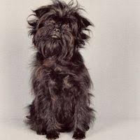 dog breeds list of all dog breeds