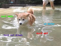 Christmas Doge Meme - doge swimming yes memes