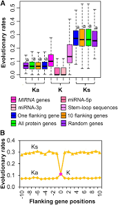 evolutionary patterns and coevolutionary consequences of mirna