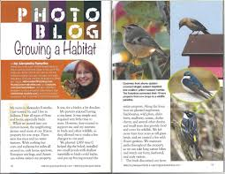 midwest bird watching blog