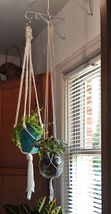 Plants Indoors by 52 Best House Plants Images On Pinterest Indoor Plants Plants