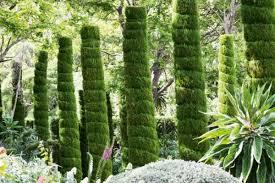 the best plants for narrow shady gardens stuff co nz