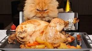 15 things you didn t about thanksgiving