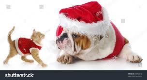 adorable cat dog dressed christmas reflection stock photo 58058842