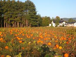 Central Point Pumpkin Patch Oregon by Whistle Pig Farm Noxen Pa Photography Pinterest