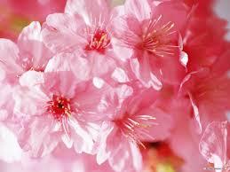 Flower Wallpaper Spring Flower Wallpapers Wide Screen Wallpaper 1080p 2k 4k