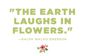 flower quotes 12 calming thoughts on flowers reader s digest