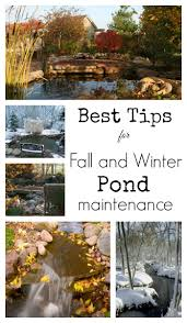 Aquascape Tree Our Best Tips For Fall And Winter Pond Maintenance Aquascape Inc