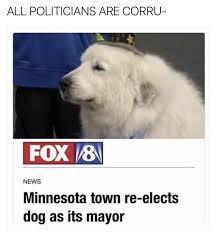 Best Dog Memes - the 100 best dog memes ever politicians dog memes and memes
