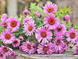 blooming flowers top 15 fall blooming flowers for a perennial garden