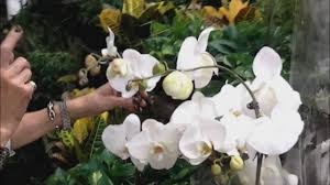 Orchid Plants How To Orchid Plants For The Right Price Home Depot Shopping
