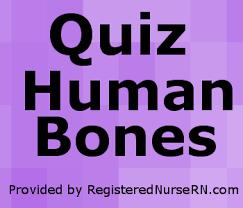 Human Ear Anatomy Quiz Quiz On Human Bones For Anatomy U0026 Physiology