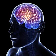 Brain Mapping Obama U0027s Brain Activity Map Good News For The Psychology Of