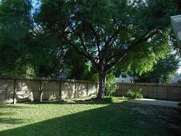shade trees are important to landscaping digital jokers