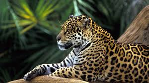 Cool Animal Wallpapers by New Cool Animal Pics View 774258 Wallpapers Risewlp