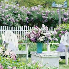12 best images about favorite flowers for garden and making