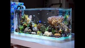 Aquarium For Home by Fish Tank Rarerium Fish Tank Photos Design Maxresdefault Idea