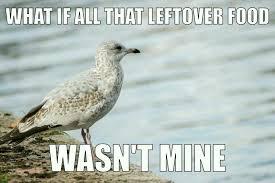 Finding Nemo Seagulls Meme - contemplating seagull memes
