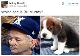 Puppy Eyes Meme - bill murray s devastated face inspires a series of hilarious memes