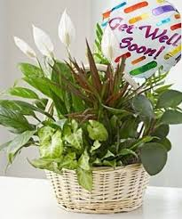 get well soon gifts living plant garden with get well soon mylar balloon hospital