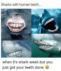 Shark Week Meme - 25 best memes about shark with human teeth shark with human