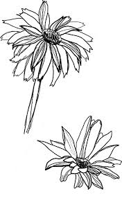 sketch of aster flower coloring pages bulk color
