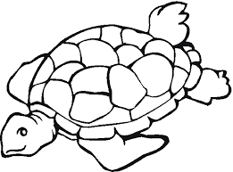 turtle coloring coloring book coloring pages 22910