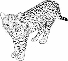 tabby cat coloring pages coloring pages cats